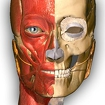 Anatomy Learning - 3D Atlas Icon Image