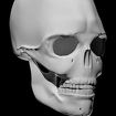 Bones Human 3D (anatomy) Icon Image