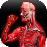 Anatomy Muscles APK