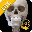 Skeletal System 3D Anatomy Lt icon
