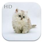 Cute Cat HD Wallpaper APK