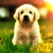 Yavru Köpek Videoları Icon Image