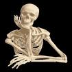 Human Anatomy Icon Image