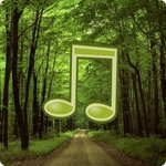 Forest Sounds Nature To Sleep APK