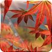 Autumn Tree Free Wallpaper Icon Image